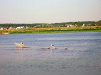 Пра 2007
